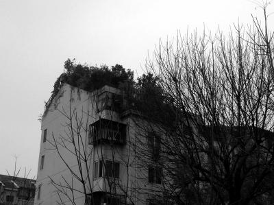 """居民楼顶的""""空中花园""""大片绿色十分引人注目.京华时报记者 卫张宁"""