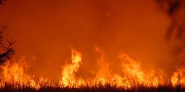 内蒙古大兴安岭林区发生火灾 明火已基本被扑灭