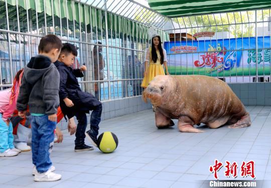 巧遇海象和小朋友踢足球,所以就让儿子参加了,她觉得这个六一儿