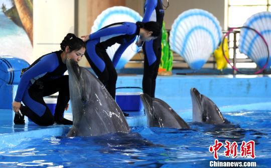 """""""90後""""女驯兽师和她的海豚""""搭档"""""""