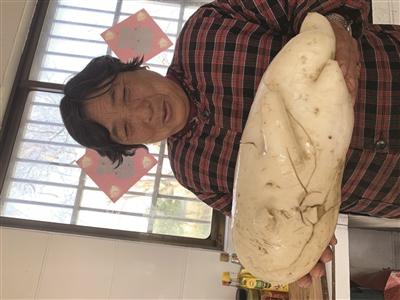 9.5斤重大萝卜 长得像冬瓜!