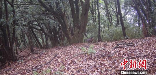 湖北恩施州首次发现全省无记录物种蛇雕