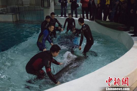 横跨三省长途旅行 5只海豚顺利抵达冰城