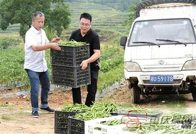 驻村第一书记�R晨蹲农贸市场摆摊 贫困户种的辣椒找到了销路