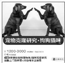 38万克隆宠物狗?专家:没必要 不能延续记忆