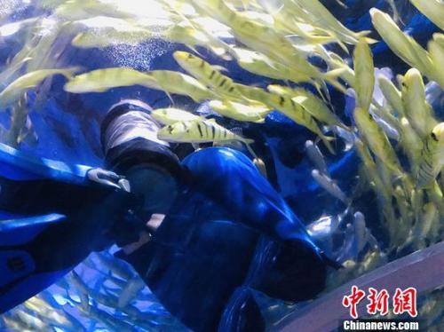"""海洋动物""""男保姆"""":只要被鱼群环绕就是专注和自由"""