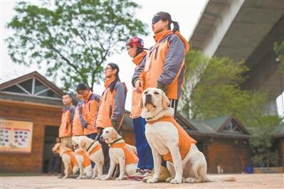 资金不足、专业训犬师缺乏  导盲犬供不应求