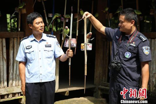 西雙版納從村民家收繳71只野生鸚鵡 全部放歸自然