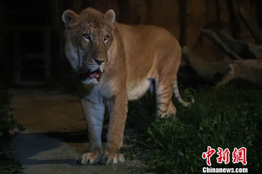 特色夜间野生动物园上海试迎客 推动夜间经济发展